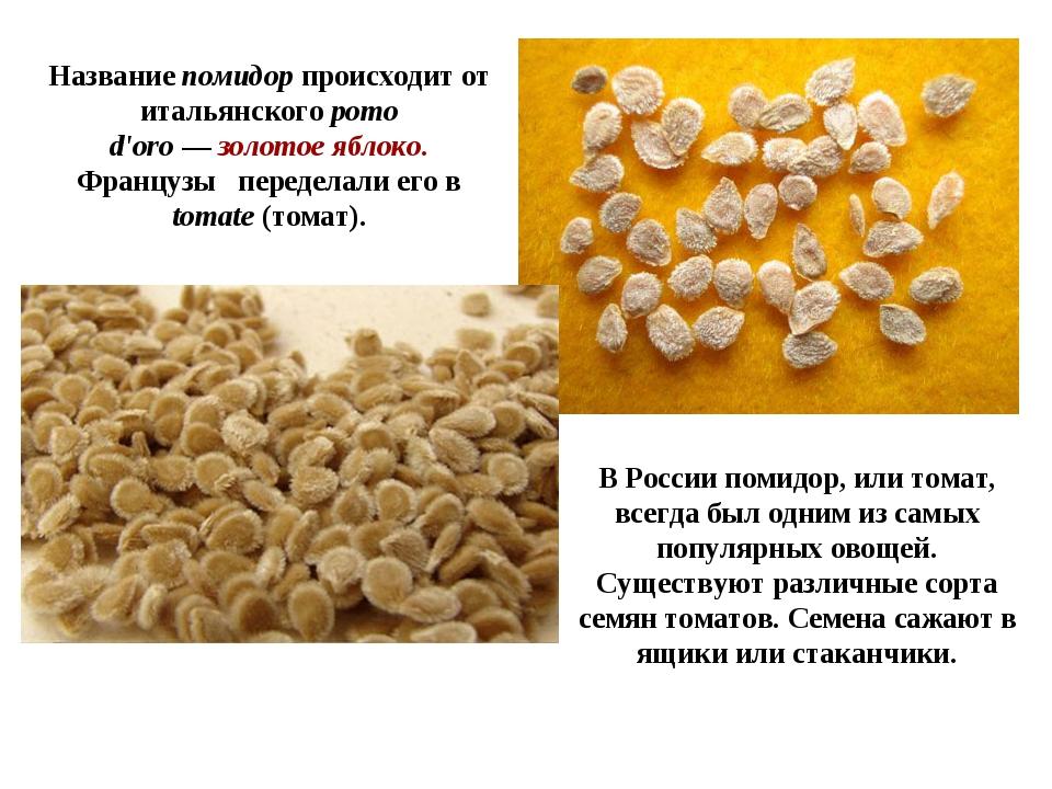 В России помидор, или томат, всегда был одним из самых популярных овощей. Сущ...
