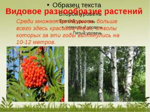 Среди множества деревьев больше всего здесь красавиц-берез, стволы которых за