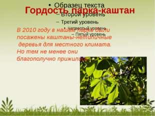 В 2010 году в нашем парке были посажены каштаны-нетипичные деревья для местно