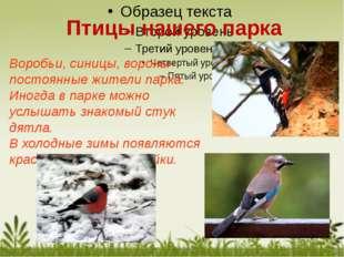 Воробьи, синицы, вороны- постоянные жители парка. Иногда в парке можно услыша