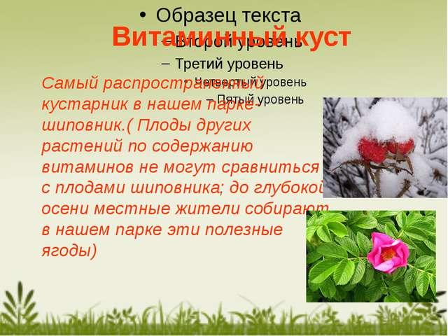 Самый распространенный кустарник в нашем парке-шиповник.( Плоды других растен...