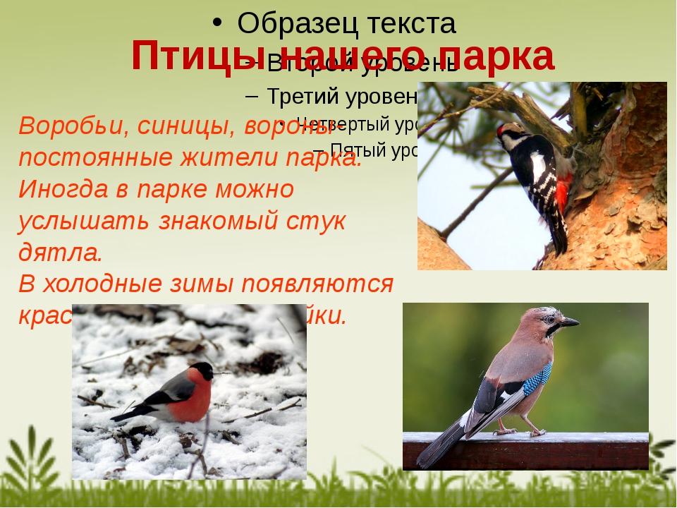 Воробьи, синицы, вороны- постоянные жители парка. Иногда в парке можно услыша...