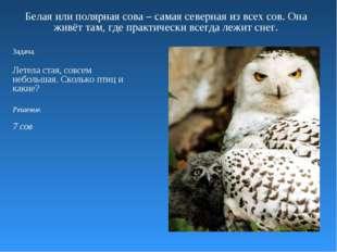 Белая или полярная сова – самая северная из всех сов. Она живёт там, где прак