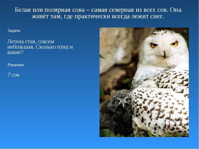 Белая или полярная сова – самая северная из всех сов. Она живёт там, где прак...