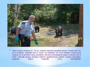 Живут бурые медведи 35—50 лет. Раньше медведи спокойно жили в лесной зоне. Но