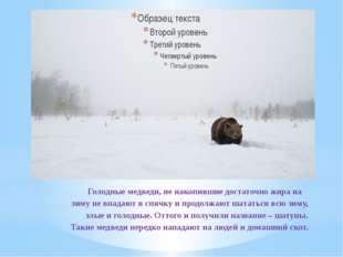 Голодные медведи, не накопившие достаточно жира на зиму не впадают в спячку