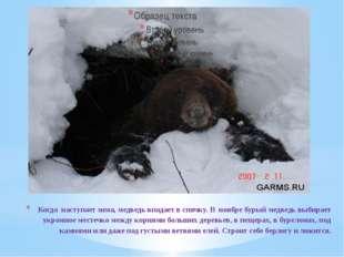 Когда наступает зима, медведь впадает в спячку. В ноябре бурый медведь выбира