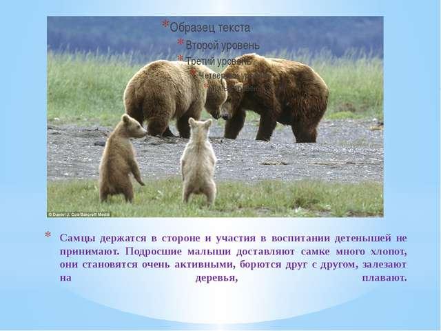 Самцы держатся в стороне и участия в воспитании детенышей не принимают. Подро...