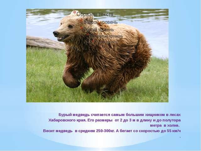 Бурый медведь считается самым большим хищником в лесах Хабаровского края. Его...