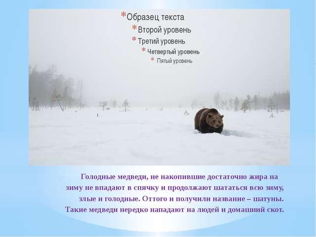 Голодные медведи, не накопившие достаточно жира на зиму не впадают в спячку...