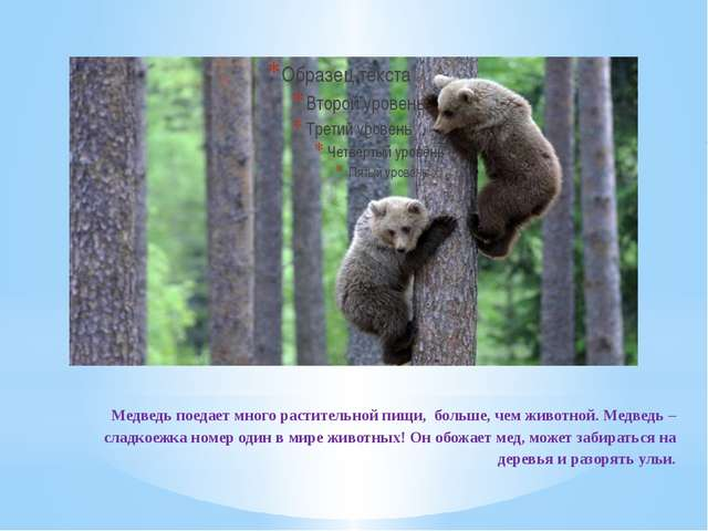 Медведь поедает много растительной пищи, больше, чем животной. Медведь – сла...
