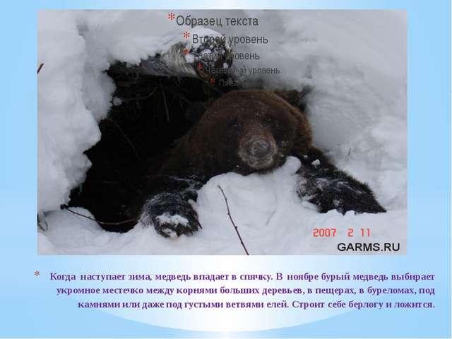 Когда наступает зима, медведь впадает в спячку. В ноябре бурый медведь выбира...