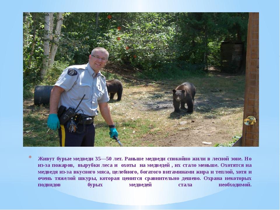 Живут бурые медведи 35—50 лет. Раньше медведи спокойно жили в лесной зоне. Но...