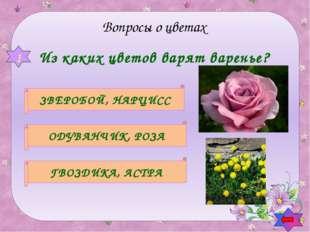 Какой цветок символизирует болтливость? КОЛОКОЛЬЧИК ПОРТУЛАК МИМОЗА 3 Вопросы