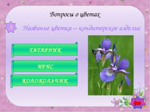 В народе этот цветок зовут полевыми слезками, искорками, звездочками, зорьк