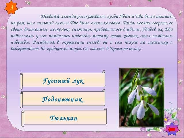 Фиалка Незабудка Сирень 6 Этот цветок возник из слёз невесты при расставани...