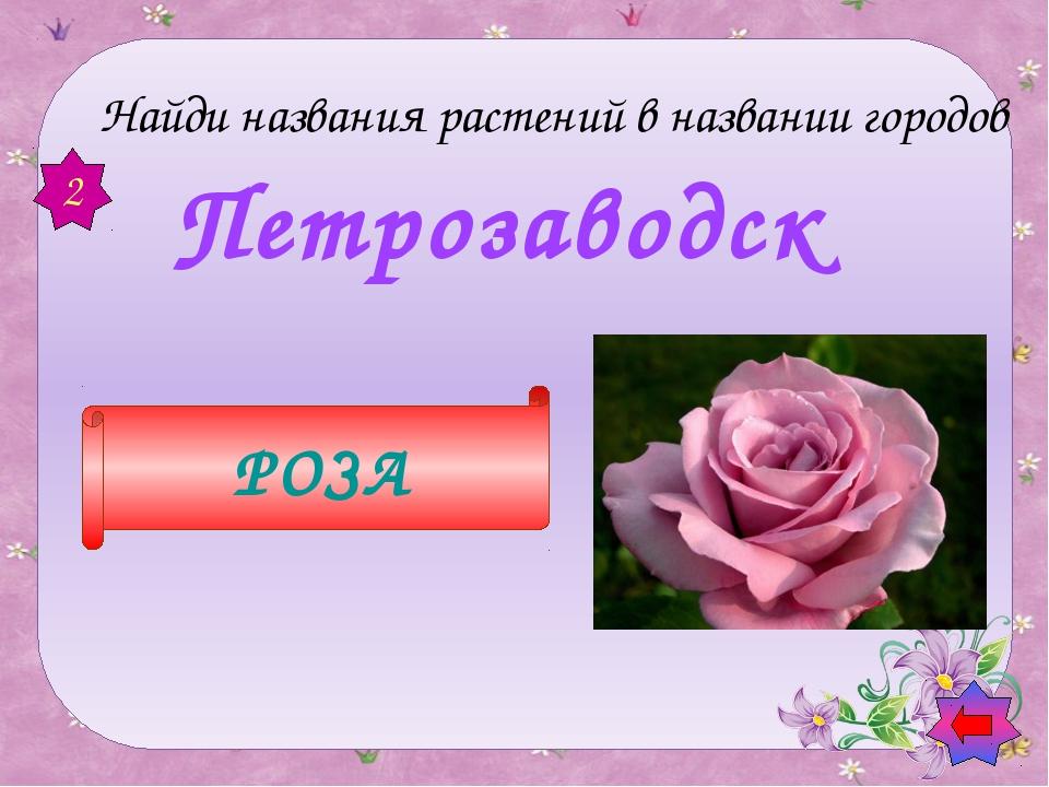Так маленького Васю называют И те цветы, что в поле собирают Загадки о цвет...