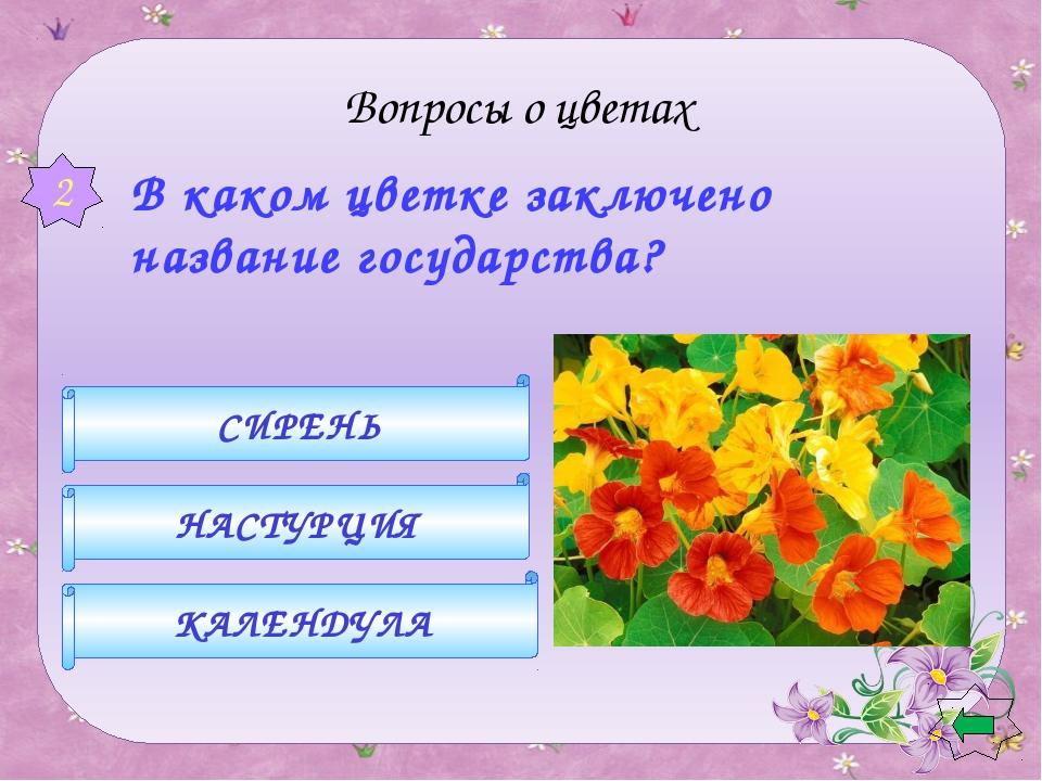 астра ромашка хризонтема 3 Вопросы о цветах  Какой цветок носит имя звезд?