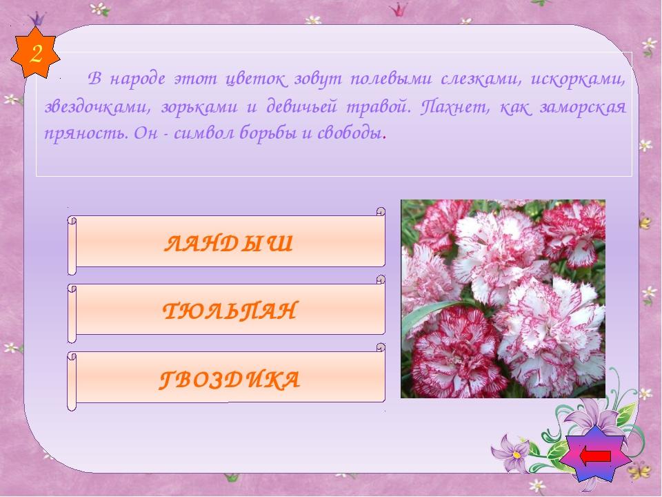Шиповник Ландыши Рябина 5 После того, как этот цветок отцветает , на месте...