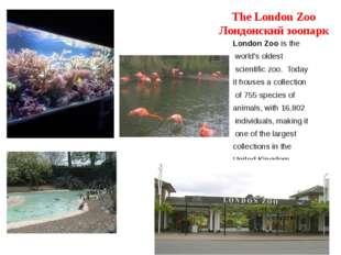 The London Zoo Лондонский зоопарк London Zoo is the world's oldest scientific