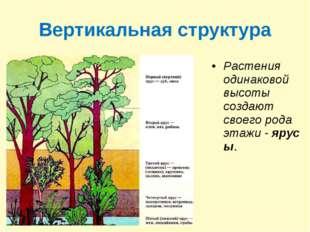 Вертикальная структура Растения одинаковой высоты создают своего рода этажи-