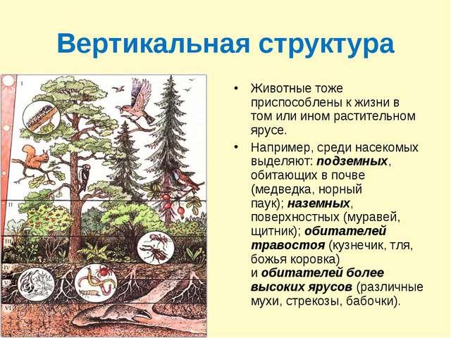 Вертикальная структура Животные тоже приспособлены к жизни в том или ином рас...