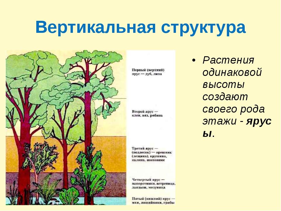 Вертикальная структура Растения одинаковой высоты создают своего рода этажи-...