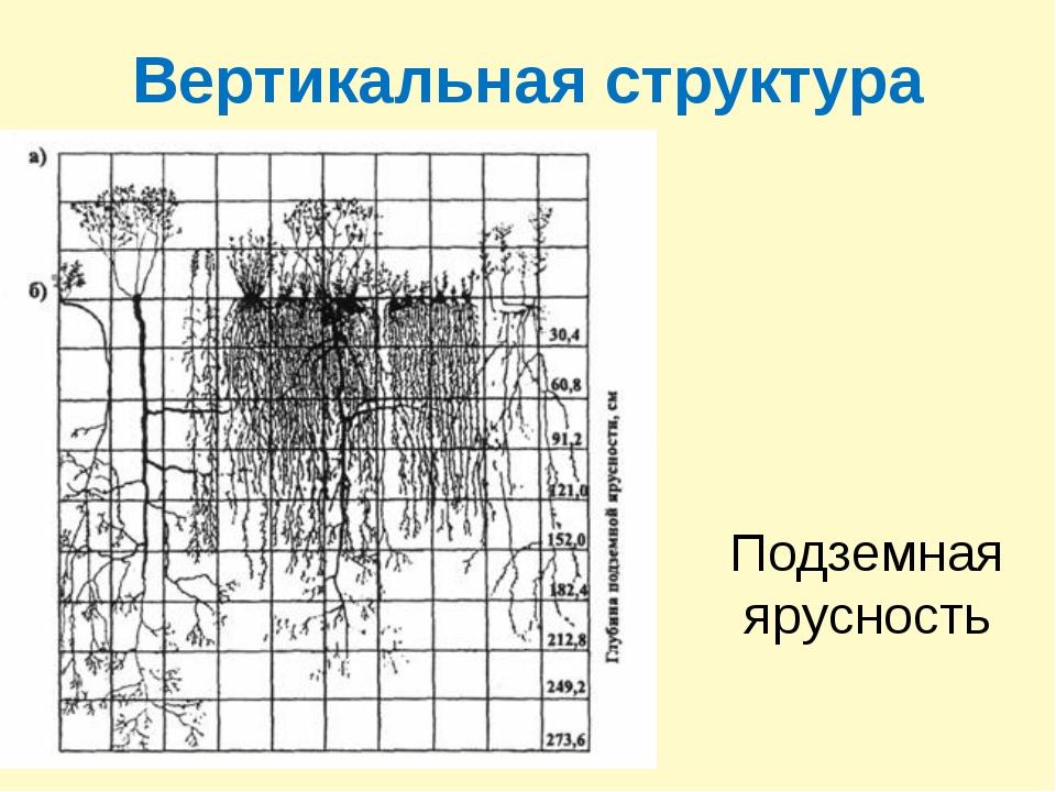 Вертикальная структура Подземная ярусность