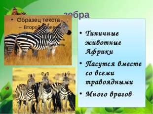 Типичные животные Африки Пасутся вместе со всеми травоядными Много врагов зебра