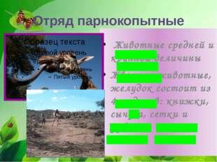 Отряд парнокопытные Животные средней и крупной величины Жвачные животные, жел