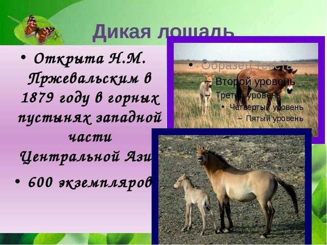 Открыта Н.М. Пржевальским в 1879 году в горных пустынях западной части Центра...