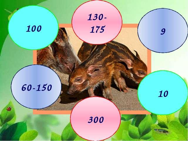 У самцов изогнутые клыки 9 130-175 100 10 300 60-150