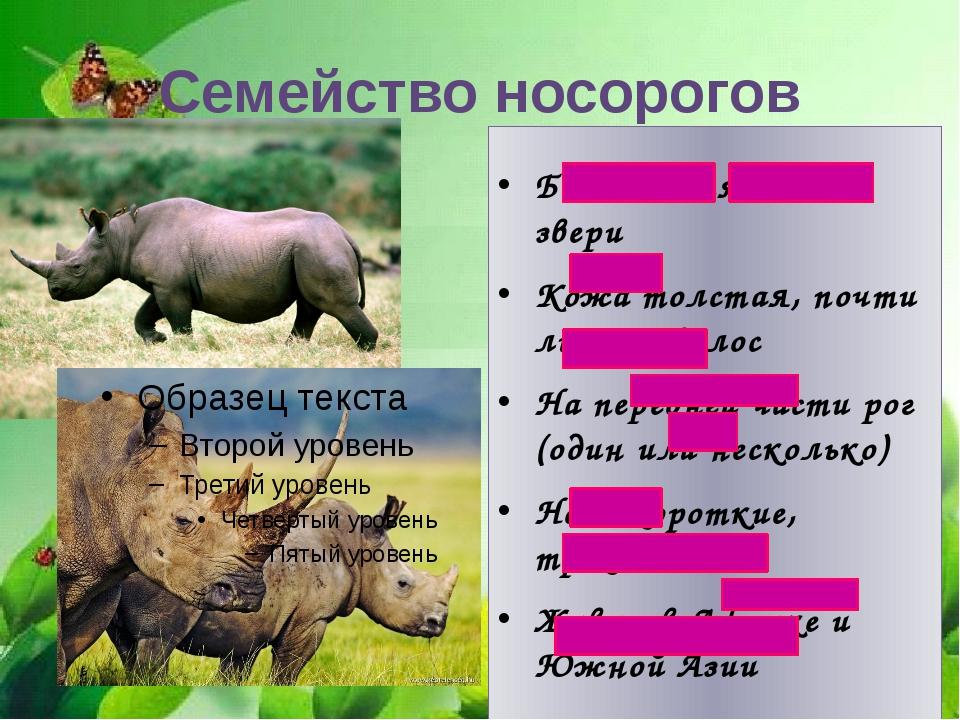 Большие тяжелые звери Кожа толстая, почти лишена волос На передней части рог...