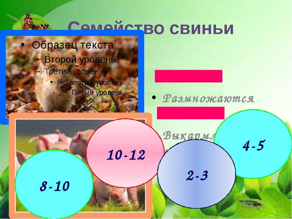 Размножаются весной Выкармливают молоком Семейство свиньи 4-5 10-12 2-3 8-10