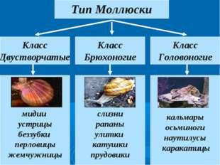 Тип Моллюски Класс Двустворчатые Класс Головоногие Класс Брюхоногие мидии уст