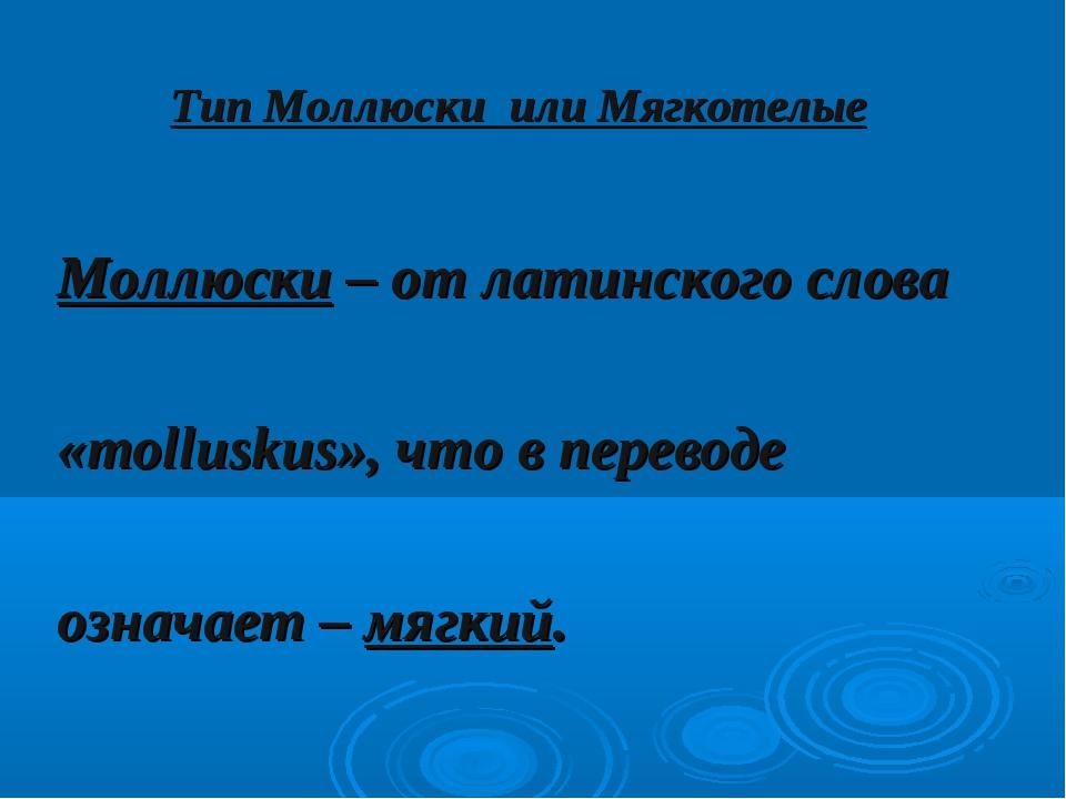 Тип Моллюски или Мягкотелые Моллюски – от латинского слова «molluskus», что в...