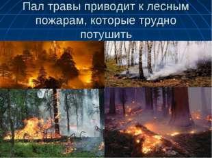 Пал травы приводит к лесным пожарам, которые трудно потушить