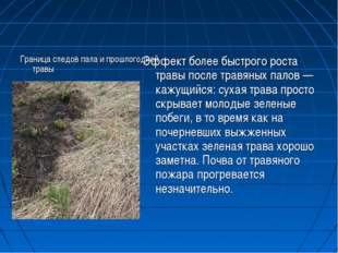 Граница следов пала и прошлогодней травы Эффект более быстрого роста травы по