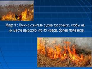 Миф 3 : Нужно сжигать сухие тростники, чтобы на их месте выросло что-то ново