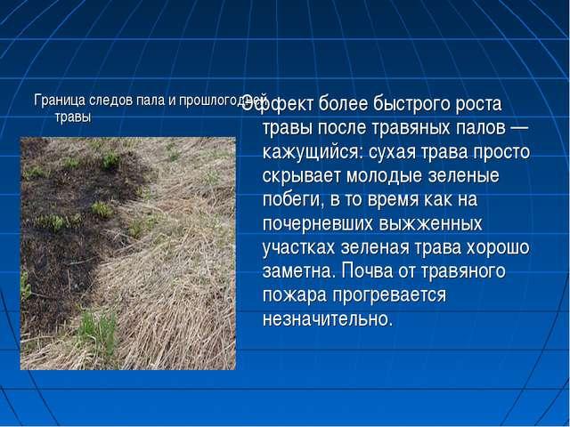 Граница следов пала и прошлогодней травы Эффект более быстрого роста травы по...