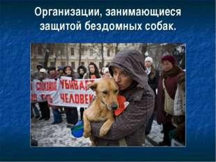 Организации, занимающиеся защитой бездомных собак.