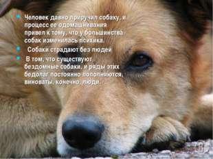 Человек давно приручил собаку, и процесс ее одомашнивания привел к тому, что