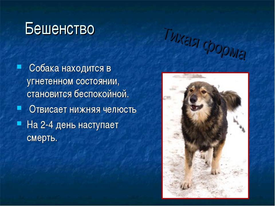 Бешенство Собака находится в угнетенном состоянии, становится беспокойной. От...