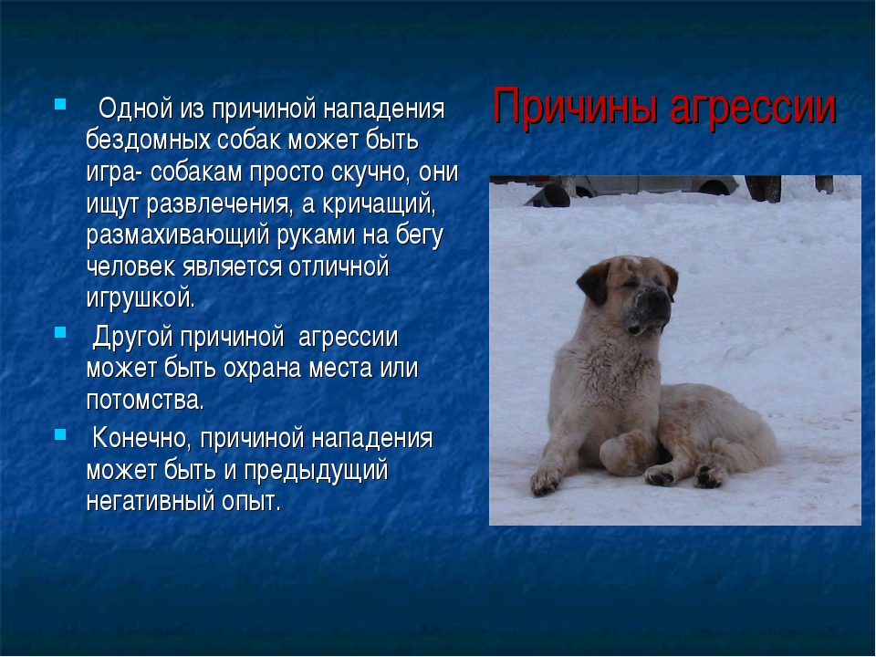 Одной из причиной нападения бездомных собак может быть игра- собакам просто...