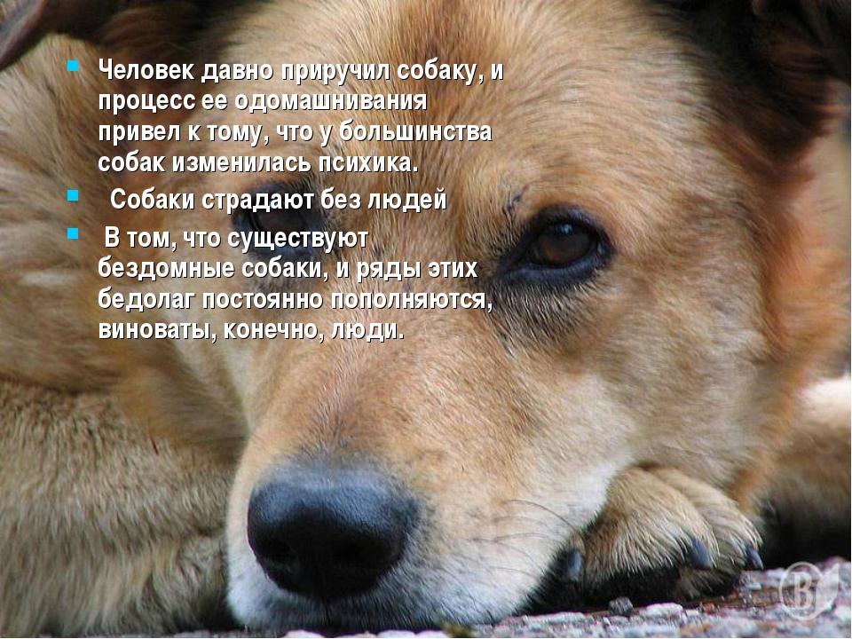 Человек давно приручил собаку, и процесс ее одомашнивания привел к тому, что...