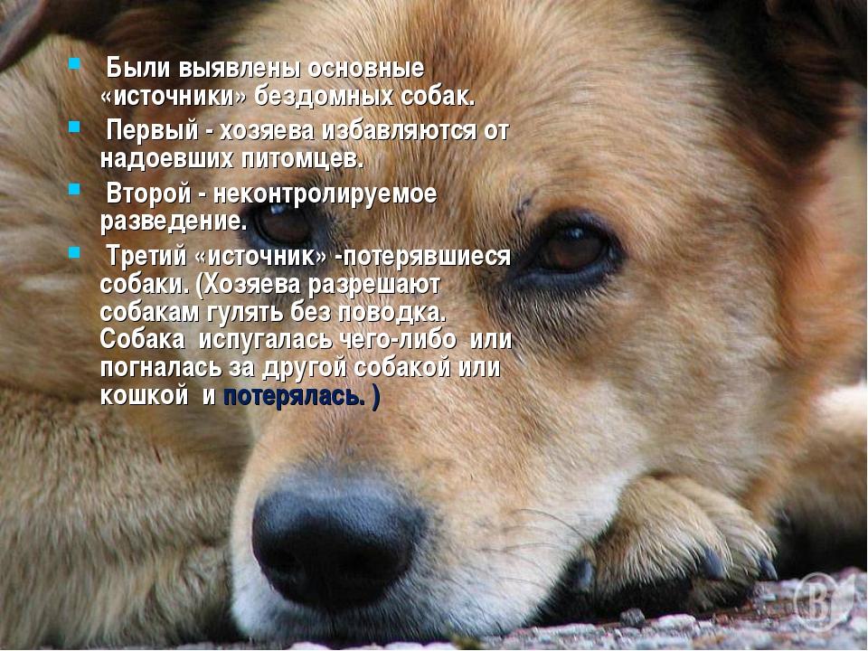 Были выявлены основные «источники» бездомных собак. Первый - хозяева избавля...