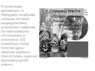 В нескольких километрах от Лигедзино погибшим собакам, которые защищали Киев,