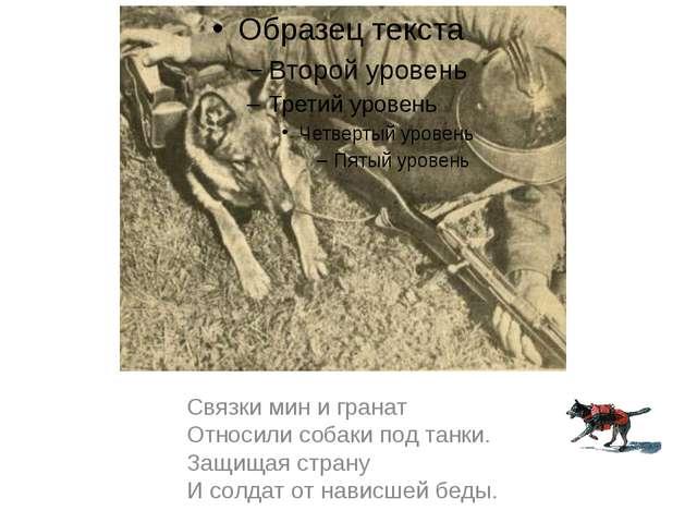 Связки мин и гранат Относили собаки под танки. Защищая страну И солдат от нав...