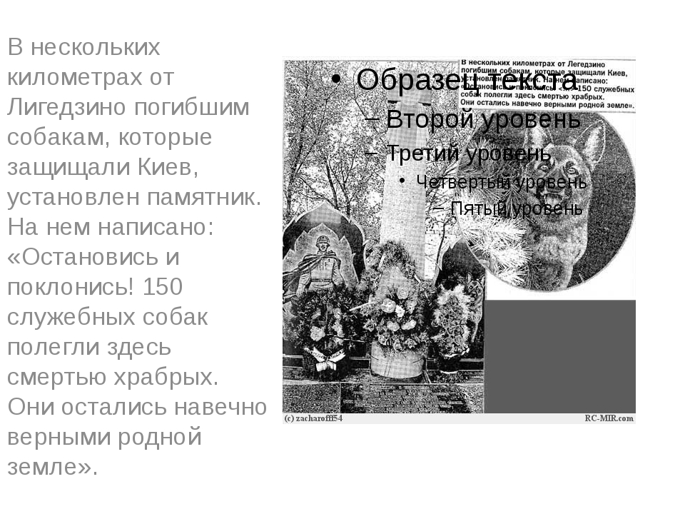 В нескольких километрах от Лигедзино погибшим собакам, которые защищали Киев,...