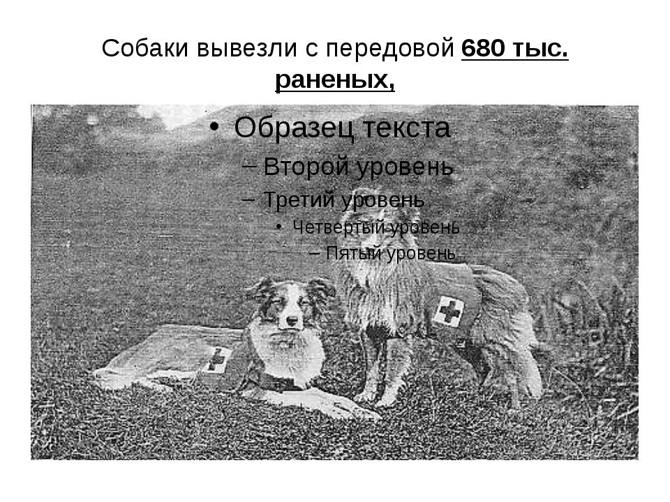 Собаки вывезли с передовой 680 тыс. раненых,